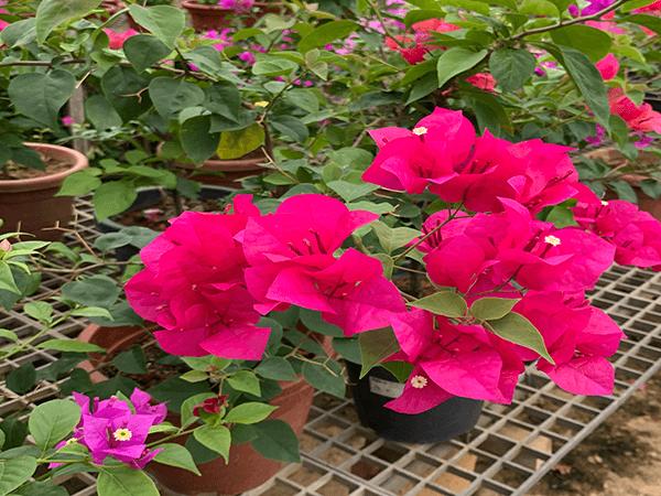 Kims General Contrator Landscaping Gardening (1)